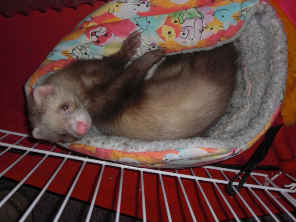 Important Ferret Cage Tips to Consider