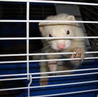 Best Ferret Cages